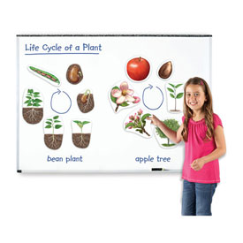 Giant Magnetic Plant Life Cycles