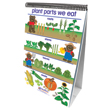 All About Plants Flip Charts