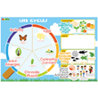 Life Cycles Magnetic Wall Stickers