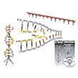 K'NEX® Education DNA Replication & Transcription
