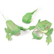 Frog Life Cycle 3-D Model Making Kit