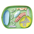Simple Plant Cell 3-D Model Making Kit